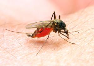 anti-malarial, vaccinations, malaria, travel clinic